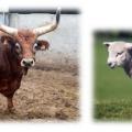 otros-tipos-de-carne