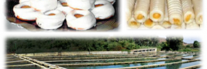 variedad gastronomica de Loja